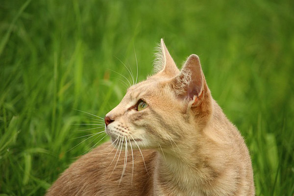 tan-cat-beside-green-grass-during-daytime