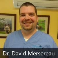 dr-david