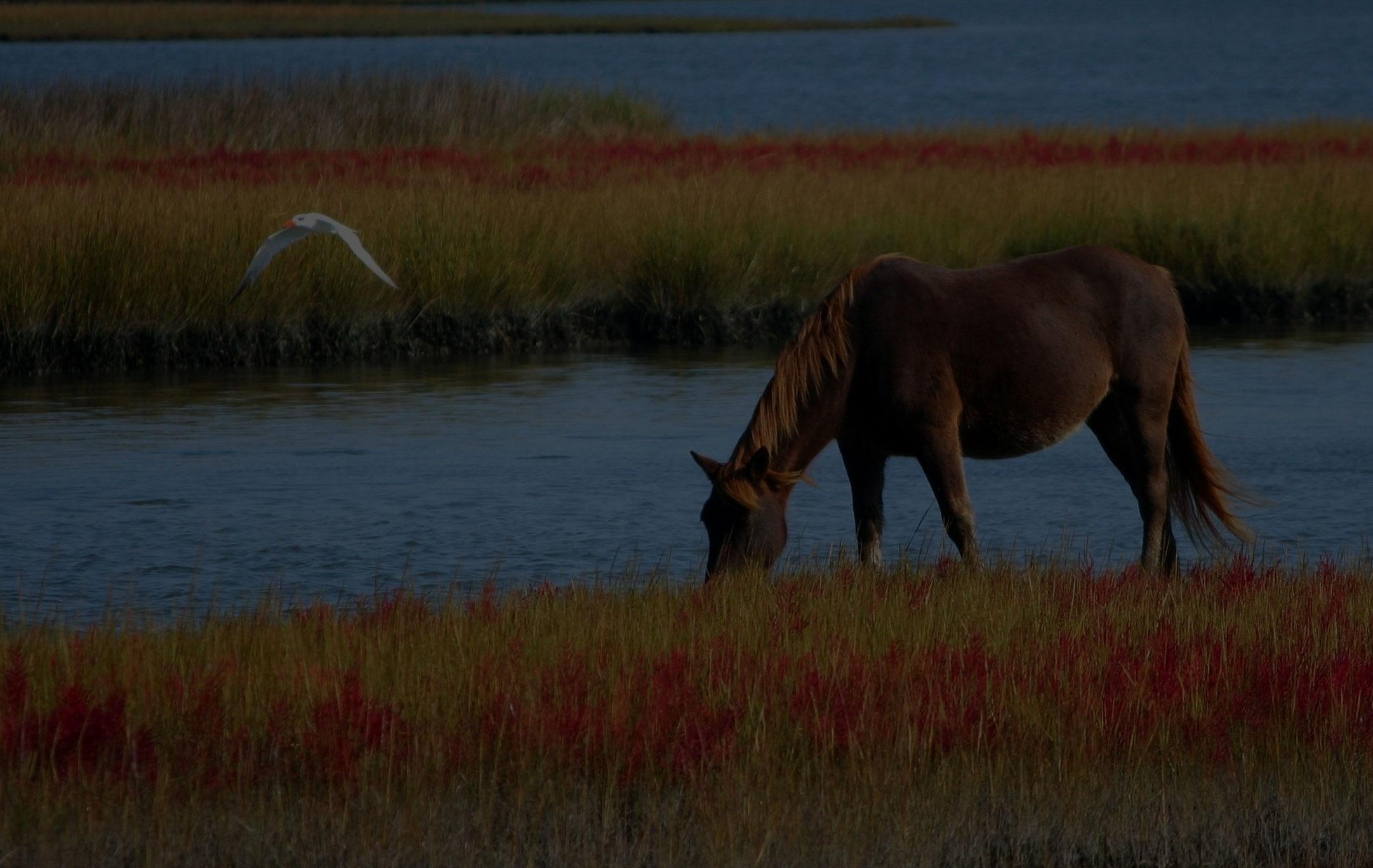 horse-wild-horse-marsh-pony-swamp