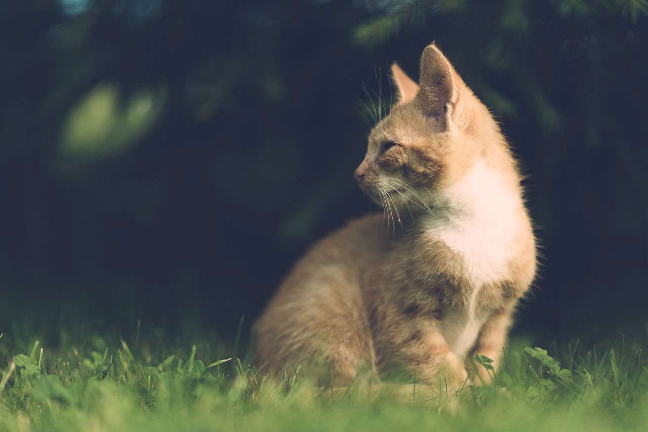 adorable-animal-blurred-background-cat
