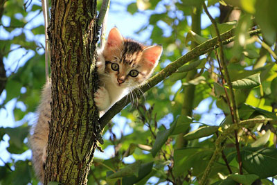 low-angle-view-of-cat-on-tree