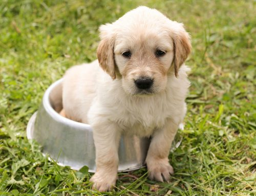 Adopted a Puppy? Here are 3 important tips!