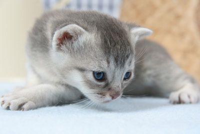 cat-kitten-cat-baby-pet
