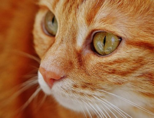 5 Common Health Problems in Senior Cats