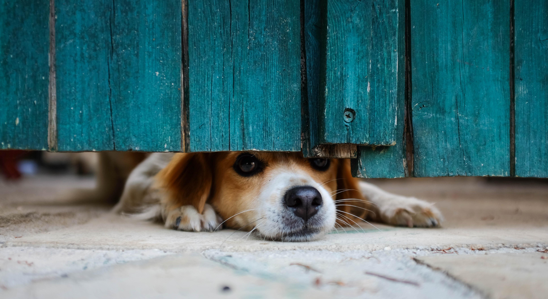 Dog waiting for freedom!